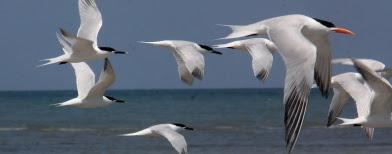 Burung-burung berjatuhan