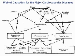 Web of Causation for the Major Cardiovascular Diseases. R. A. Stallones (1966). Prospective epidemiologic studies of cerebrovascular disease. Public Health Monograph No. 76 http://www.virtual.epm.br/cursos/epidemio/lecture/lec8351/009.htm