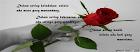 Kerana warnamu,mawar merah memang indah
