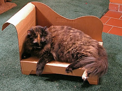 Kitty lounging in a Cardboard Cat Chaise