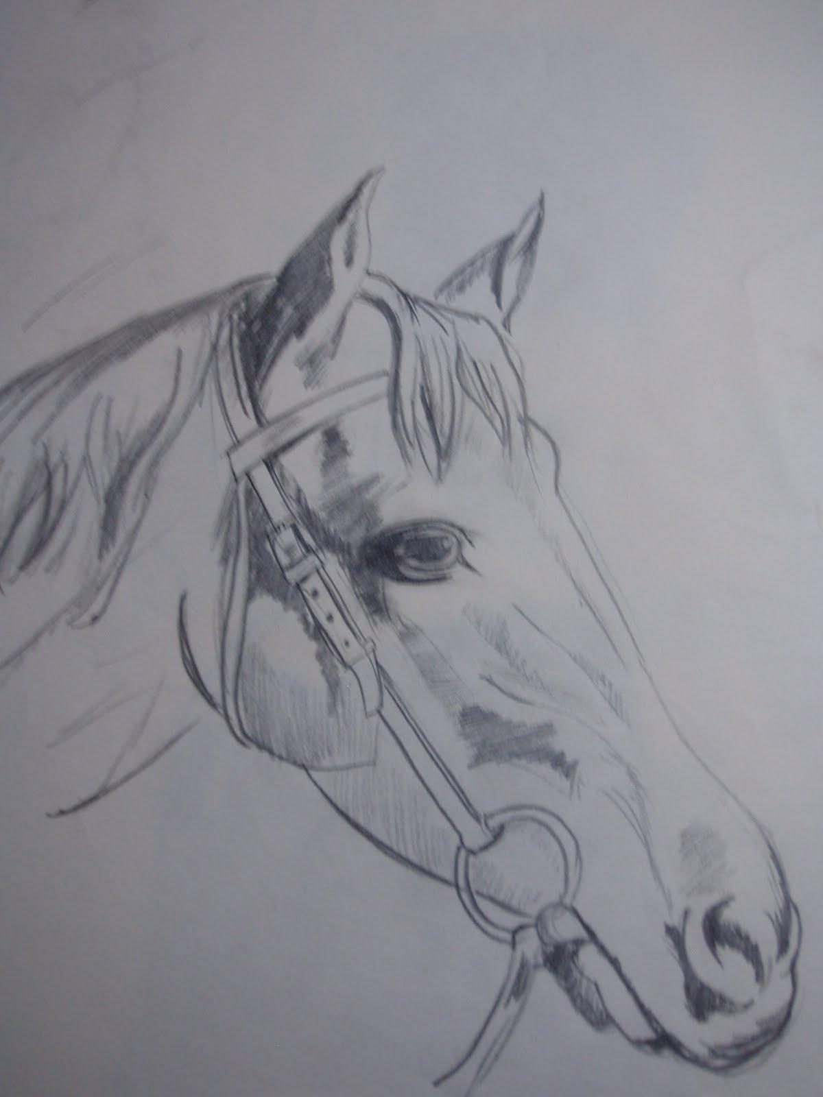 Mi cuaderno de dibujos Cabeza de caballo