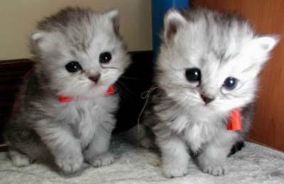 ... kucing asli ato kucing boneka tunggu koleksi kucing
