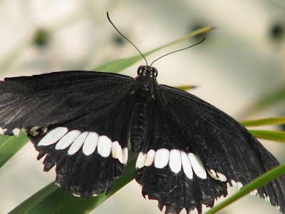 Diane b l o g en passant par la vall e papillons au for Jardin hamel papillon 2016