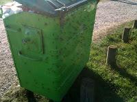 Mayfly infestation at Spade Oak