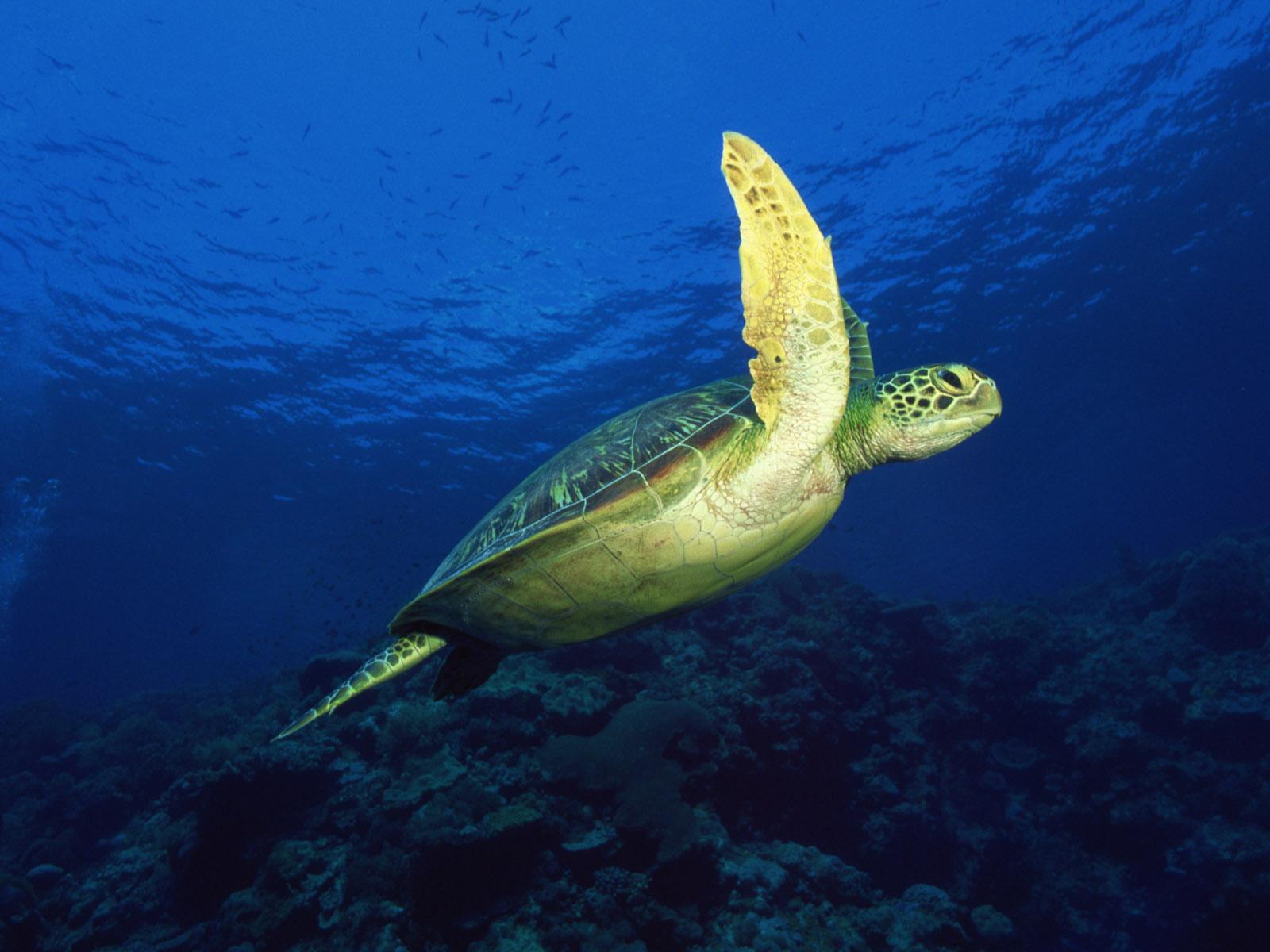 http://3.bp.blogspot.com/_xX6vPR3OQJw/S-QlFCeoNmI/AAAAAAAABCg/gN7o_ytcAAs/s1600/Underwater+Wallpaper+%2804%29.jpg