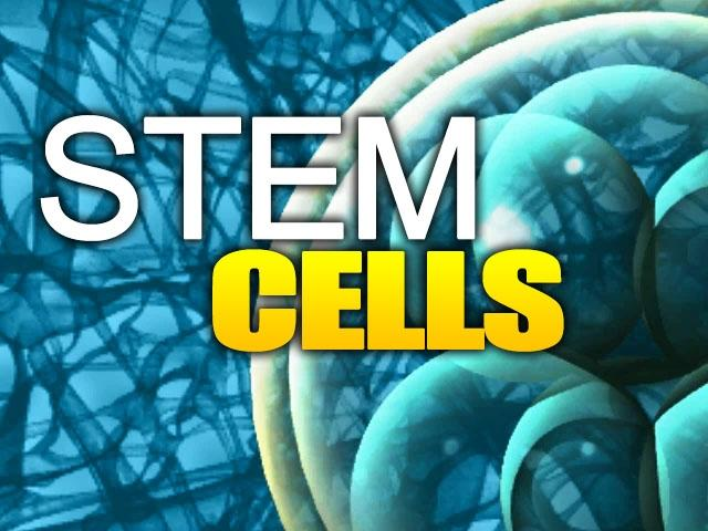 More evidence that ADULT stem cell research is much more effective than ...