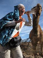 埃及的发情骆驼 :p