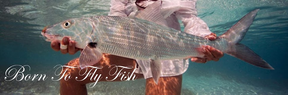 born to fly fish