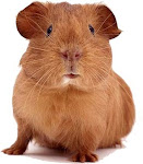 Oh wait, that's a guinea pig!  But isn't he cute?