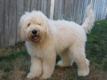 Meet Hagrid