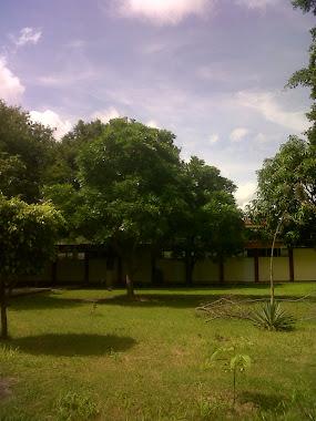 Las áreas verdes