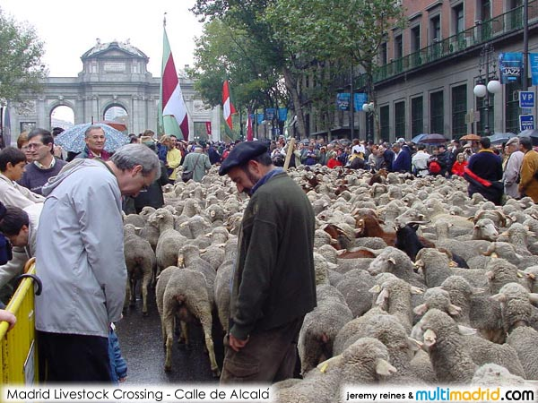 [sheep_madrid8.jpg]