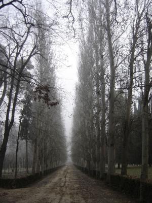 paisaje triste y nublado