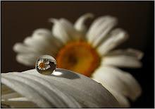 Floarea mea preferata...