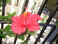 Flor de mi balcón