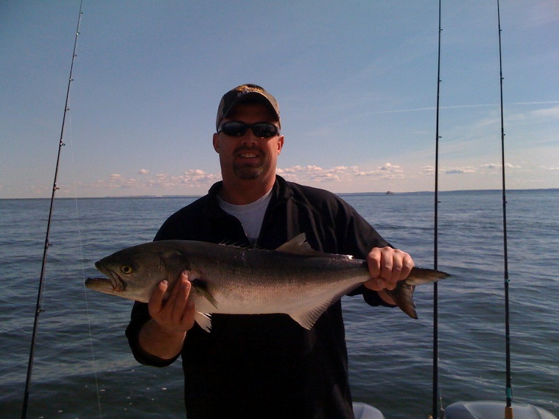 Mike 39 s wildlife pictures jigging for blue fish in long for Long island sound fishing