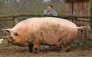 [Image: Giant_Animals_1_13.jpg]