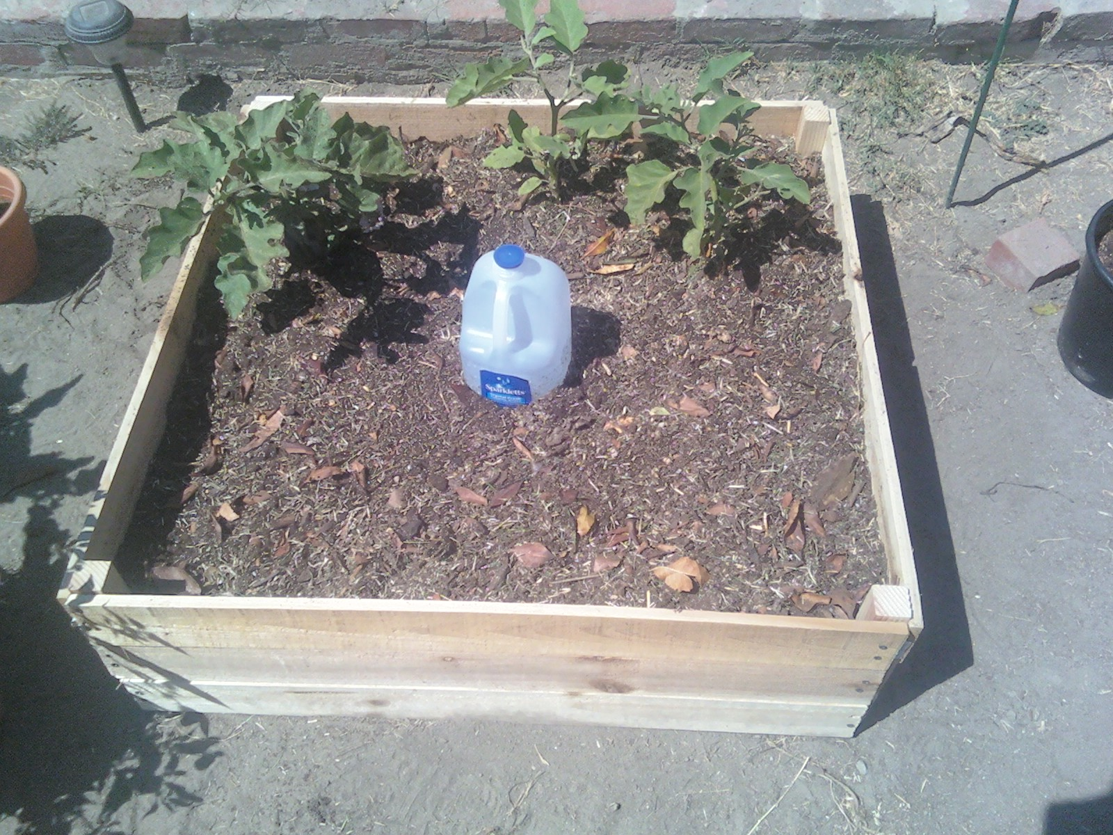 It All Started With Tomatoes Filling Raised Bed