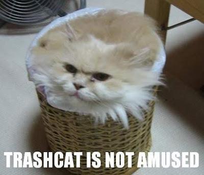 lOL Cats funny pics