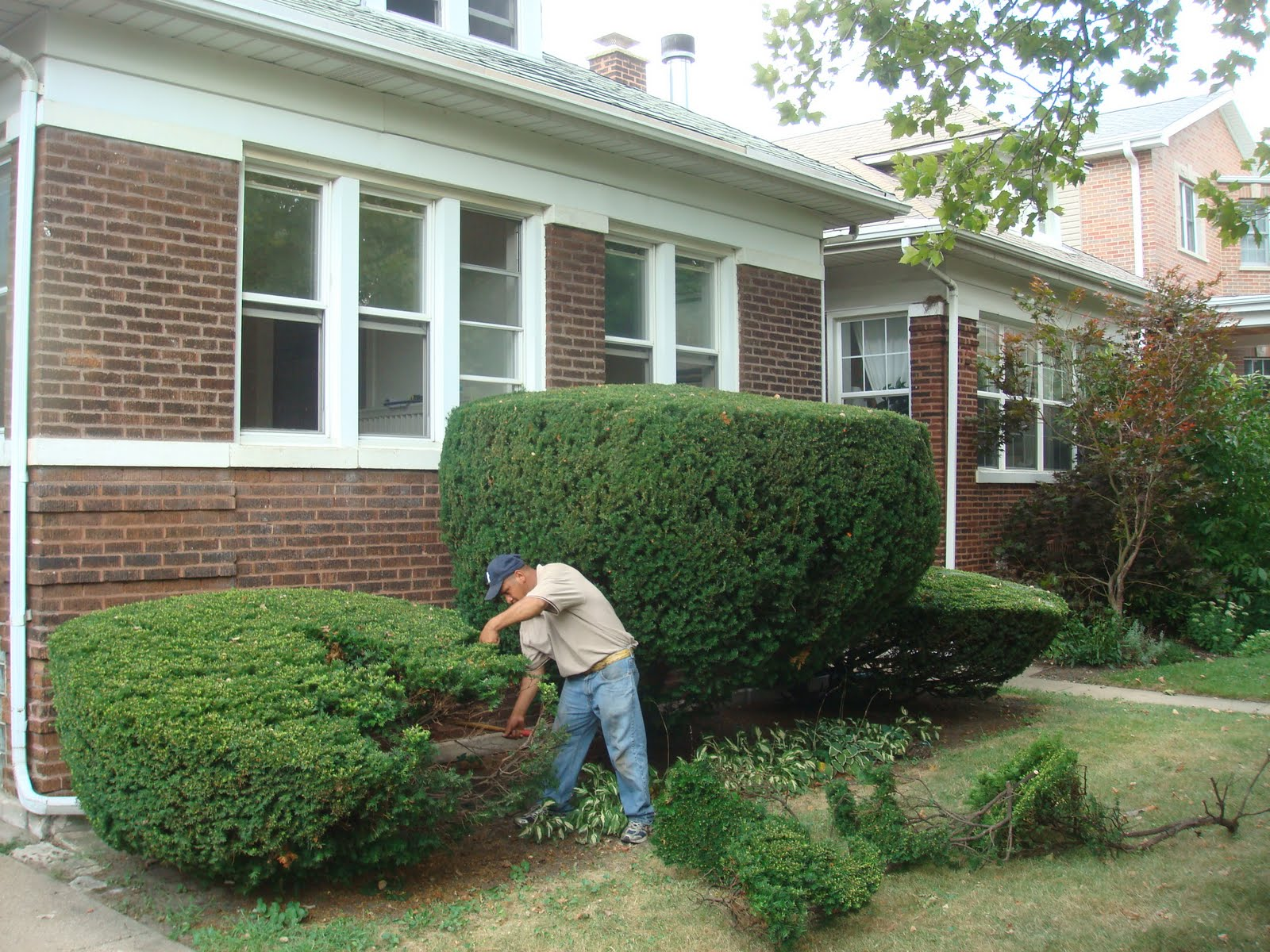 This 90 Year Old Chicago Bungalow Had Huge Evergreen Bushes Covering The Front Of House Brick Needed A Full Grind Tuck Point And Wash
