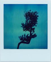 I´m Blue