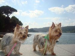 Mis perretes