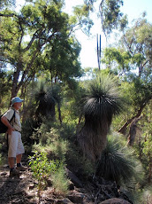 H loves Grass trees
