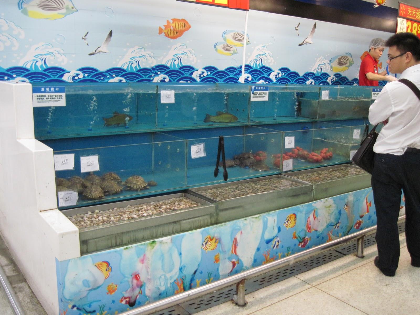 Dragon fish at walmart car interior design for Fishing nets walmart