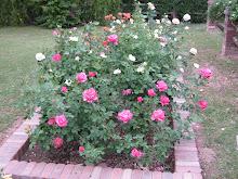 April Roses