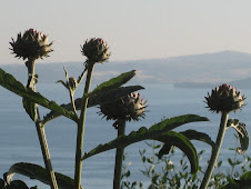 Overlooking Lake Bolsena