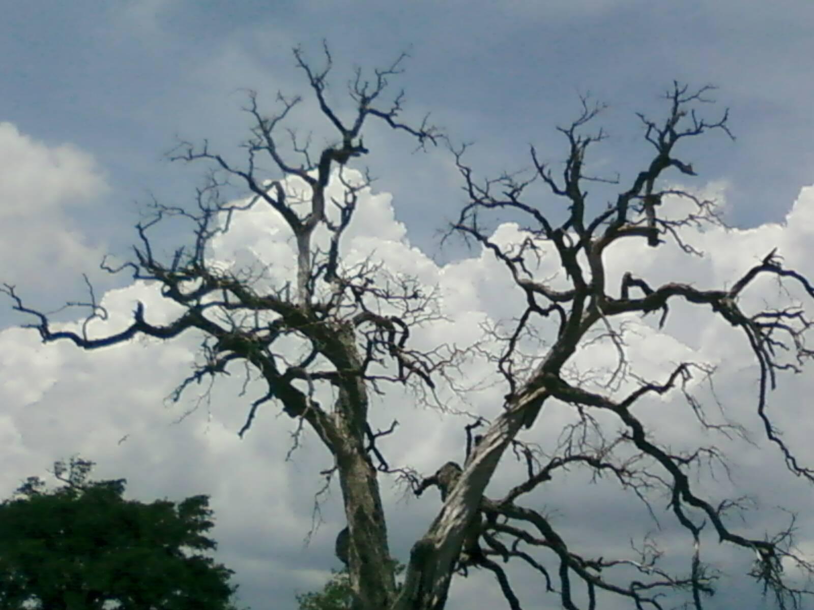 [Tree[1]]