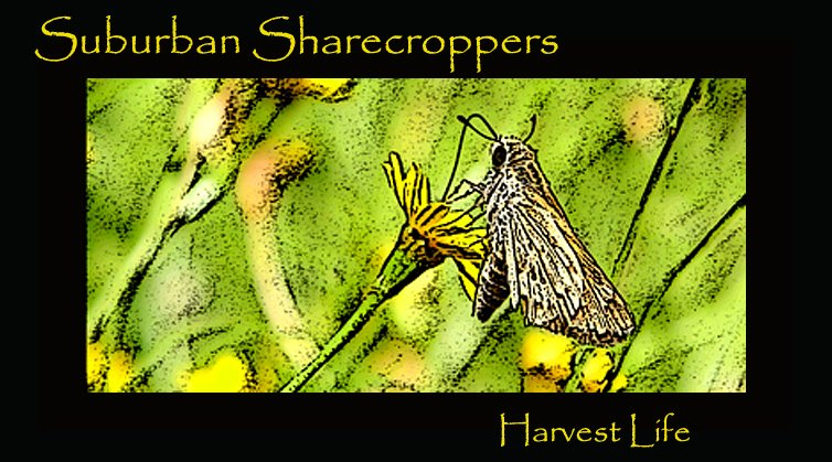 Suburban Sharecroppers