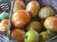 Tomates Margariteños