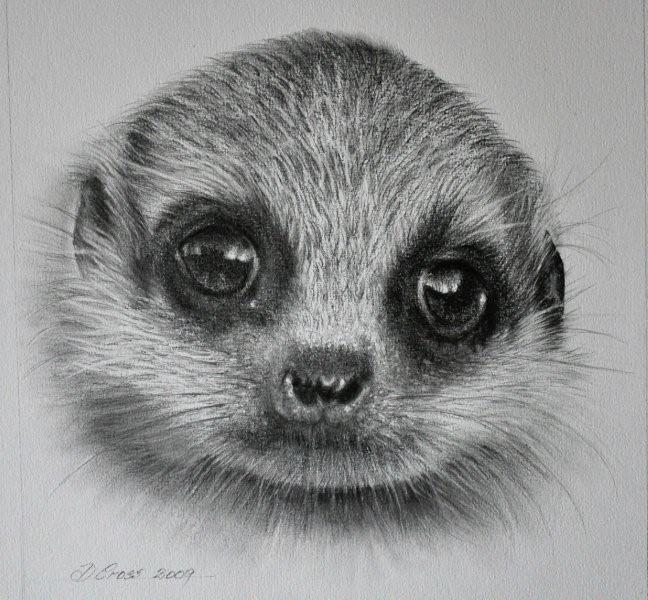 Meerkat face drawing