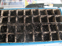Seeds planted and covered with thin soil layer