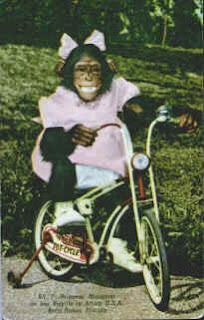 http://3.bp.blogspot.com/_xrzcrcOsOBI/R-z_aiiiI5I/AAAAAAAAAF4/Vd74NwKR-_8/s320/Afusa_chimp.jpg