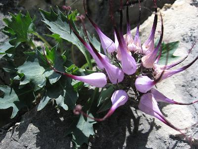 Blumen in der Vertikalen