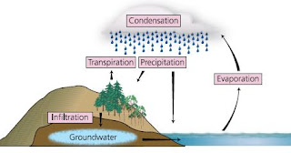 Science Knowledge: The Water Cycle