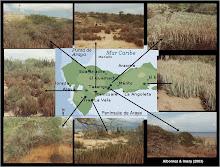 Poblaciones naturalizadas de Aloe vera