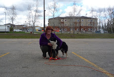 Alta-Pete Jet TD UTD is the First Border Collie to earn an Urban Tracking title