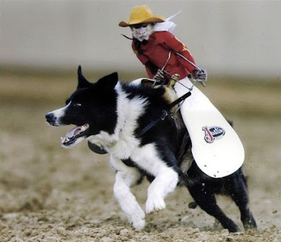funny images of monkeys. A monkey jockey?