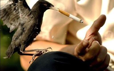 http://3.bp.blogspot.com/_xwE0rBDpg1Y/SPVbWF9XBBI/AAAAAAAACCQ/PCmVrQsw4MM/s400/funny-animals-smoking-bird.jpg