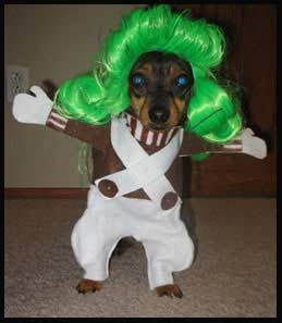 really funny animals willy wonka oompa loompa dog photo