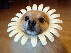 really cute sunflower dog photo