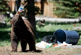 funny bear chooses pepsi over coke