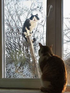 cat inside looks through window at cat outside