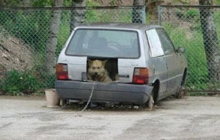 funny animals use for your old car kennel