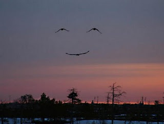 really cool pic of birds smiling at sunset