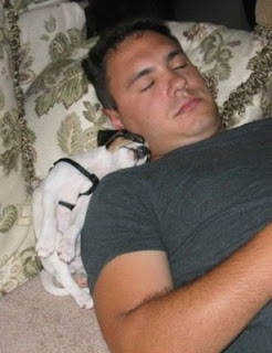 cute puppy dog photos snuggling next to sleeping owner pic in bad position