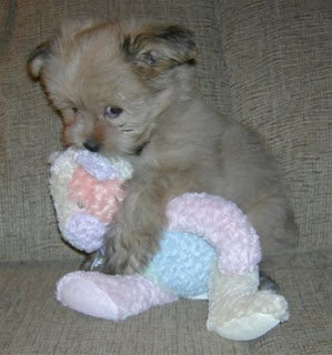 best cute puppy dog photo hugging teddy bear on sofa with gorgeous eyes perfect gorgeous pic